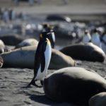 ペンギンのくちばしの特徴や色について
