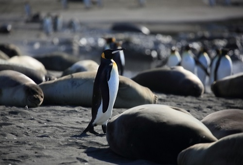ペンギン くちばし 特徴