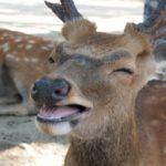 鹿の肉が一番美味しい旬の時期っていつ!?