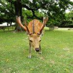 鹿一頭から取れる肉の量はどれくらい!?