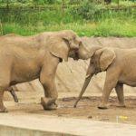 象が1日にする糞の量や重さはどれくらい!?