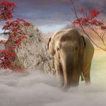 象の鳴き声にはどんな意味があるの!?