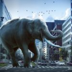 象とマンモスの大きさや違いは!?象の祖先はマンモス!?