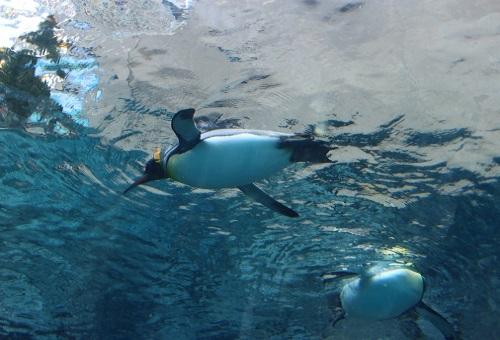 ペンギン 日本 一覧