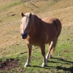 馬が1日に移動できる距離はどれくらい!?