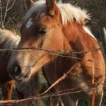 馬が首を縦や横に振る時のサインとは!?