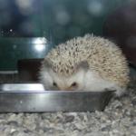 ハリネズミの餌ミルワームの正しい保存方法について