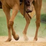 馬の蹄葉炎の原因や治療方法について