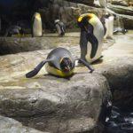 ペンギンが鳥類なのに飛べない理由とは!?