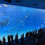 石垣島でマンタに会える海のスポットはどこ!?