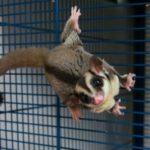 モモンガがご飯を食べない時の原因や対策方法について