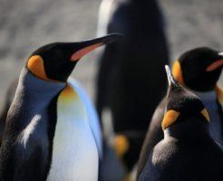 ペンギン 赤ちゃん 水族館