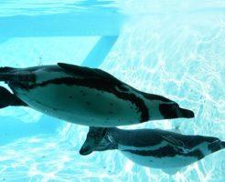 ペンギン 種類 南極