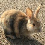 初心者におすすめ!なつきやすいウサギの種類の選び方について !