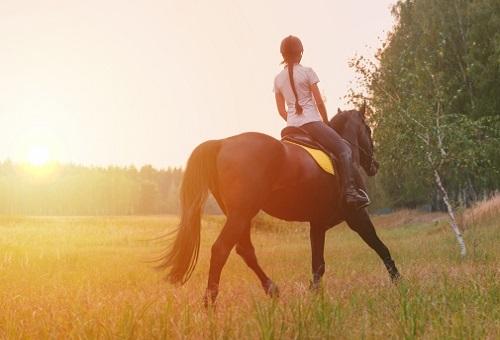 馬 寄生虫 食中毒