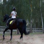 馬の海外遠征にかかる費用はいくら!?