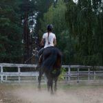 日本にいる馬の頭数はどれくらい!?