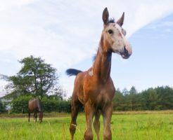 馬 意味 スピリチュアル