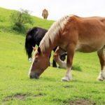 日本に名を残す有名な名馬をご紹介!