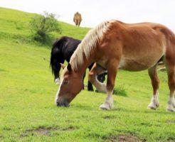 馬 サラブレッド 有名
