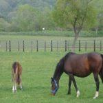「馬の輸送熱の原因や仕組み。 予防法は!?」
