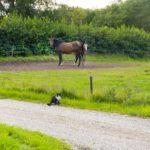「馬の蹄葉炎の原因や治療方法について」
