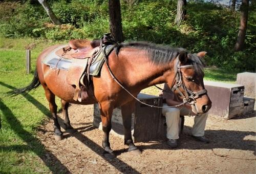 馬 移動 1日