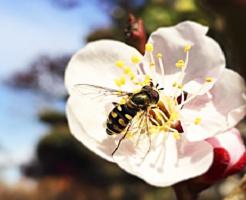 アブ 対策 蚊取り線香 効果