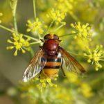 昆虫アブの大きさや見た目の特徴は?