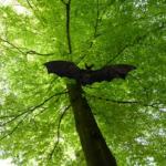 野生のコウモリを保護した場合どうすればいいの!?