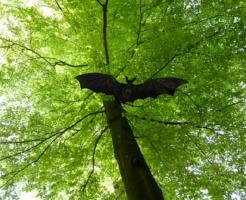 コウモリ 野生 保護