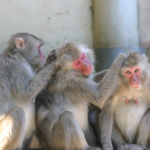 ペットに出来る可愛い猿のおすすめの種類は何!?