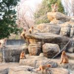 猿の群れの構造や数はどれくらい!?