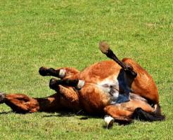 馬 砂浴び 理由