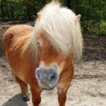 馬とポニーの違いはどこ!?
