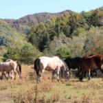 馬を放牧する意味や効果とは!?