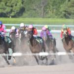 馬は平均どれくらいの速度で走るの!?
