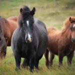 馬の性格について!種類ごとに性格が違う!?
