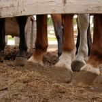 馬の足の指の数は何本なの!?