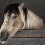 馬の喉なりってどんな症状!?手術は必要!?