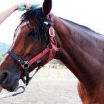 馬のブラッシングのやり方次第で信頼関係が築ける!?