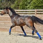 馬の疝痛の原因と治療・予防方法とは!?
