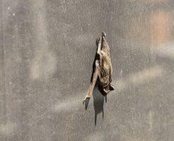 コウモリ 屋根裏 対策