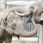象は鼻で水を飲んで貯める事も出来る!?