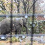 象は1日にどれくらいの餌の量を食べるの!?