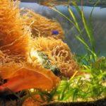 イソギンチャクの飼育にベストな海水比重とは?