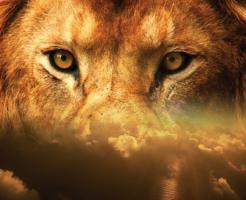 ライオン 目 色 特徴