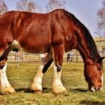 馬の心臓の位置や大きさとは!?
