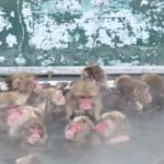 猿の日本における歴史とは!?