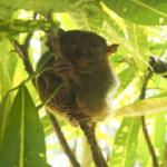 世界で1番小さい猿「ターシャ」の大きさや値段はいくら!?